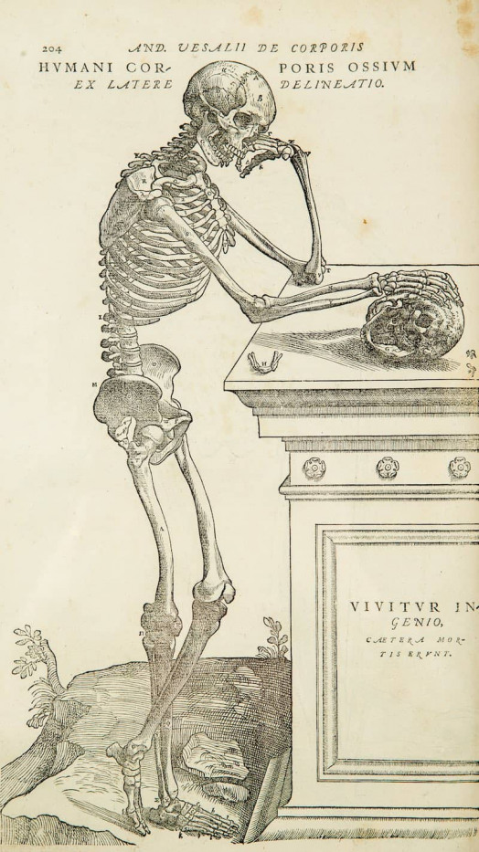 Normal radiological anatomy RadioGyan